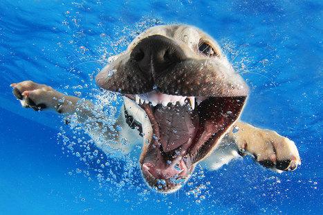 New Playful Underwater Puppy Photo Series By Seth Casteel | Designer's Resources | Scoop.it
