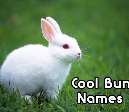 Top 100 Cool Girl Squad Names - Cute Nicknames