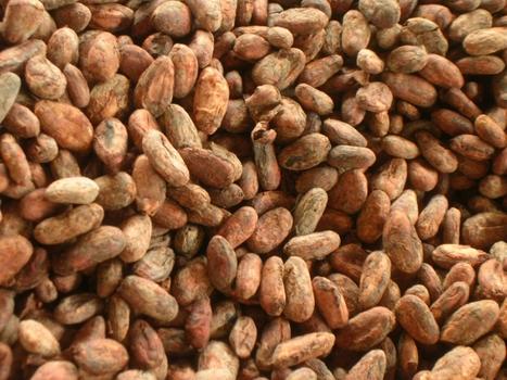 Epicatechin ingested via cocoa products reduc... [Am J Clin Nutr. 2012] - PubMed - NCBI | Longevity science | Scoop.it