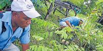 2014, año de la ONU para la agricultura familiar - eltiempo.com   Gaia Ways   Scoop.it