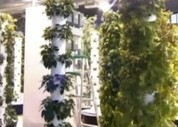 The World's First Aeroponic Vegetable Garden, in an Airport ... | Growing Food | Scoop.it