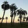 Biodiversidad desde Uruguay
