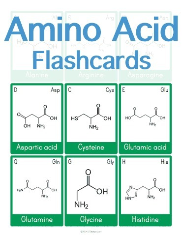Stages of mitosis flashcard maker science wor amino acid flashcards science worksheets and flashcards scoop urtaz Image collections
