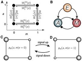 Thermodynamic Costs of Information Processing in Sensory Adaptation | Physics of Complex, Nonlinear, Non-equilibrium systems | Scoop.it