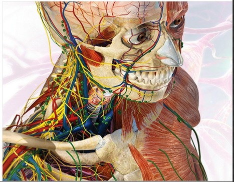 Great Websites to Teach Anatomy of Human Body in 3D | Time to Learn | Scoop.it