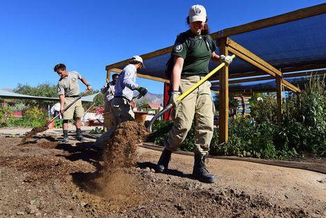 Tucson Village Farm celebrates Harvest Festival   Arizona Daily Star   CALS in the News   Scoop.it