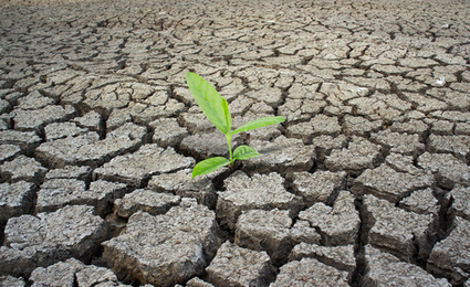 Climate Change: Why Businesses Started Caring | Sustainable Business Forum | Climate Resilience | Scoop.it