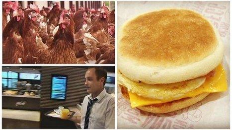 Sarthe : les œufs de Loué ont envahi les restaurants McDonald's - France 3 Pays de la Loire | Agriculture en Pays de la Loire | Scoop.it