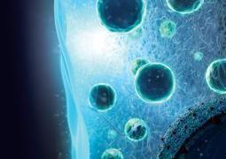 Cyborg gel implant fights can now be used to heal diabetes in mice | Amazing Science | Scoop.it