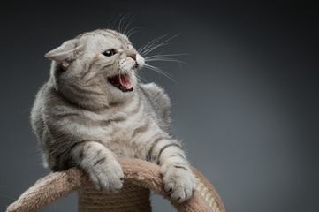 Redirected Aggression in Cats - Cat Behavior Associates | Science and life | Scoop.it