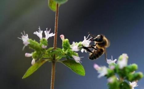 Cri d'alarme d'apiculteurs pour stopper «l'hémorragie des abeilles» | l'écologie en milieu urbain | Scoop.it