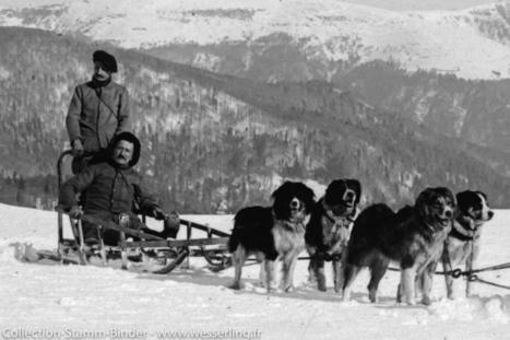 1915 - 1918 - Nom de code  » Poilus d'Alaska  » ...   Nos Racines   Scoop.it