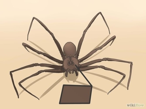 How to Identify a Brown Recluse | Motorhome Madness | Scoop.it