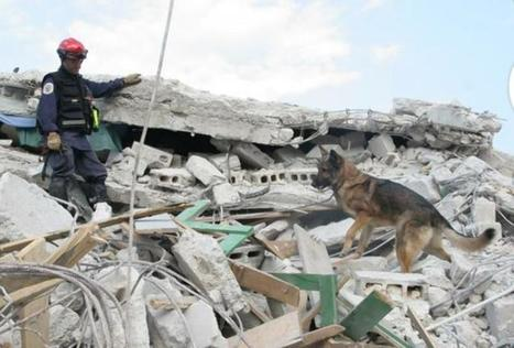NYPD K-9 Hunter, police dog who helped in Haiti, dead at 11 | Police Problems and Policy | Scoop.it
