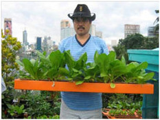 Urban vegetable farming helps achieve food security - ALAGAD Party-List | Vertical Farm - Food Factory | Scoop.it