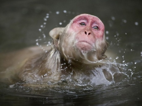 Amazing Animal Photography   Cruzine   Visual Inspiration   Scoop.it