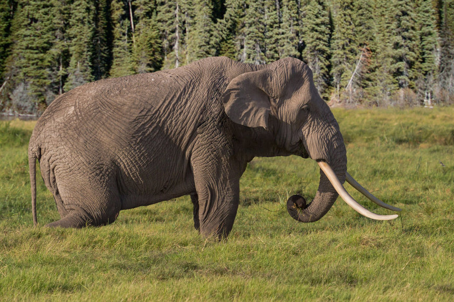 Elefantes europeos | Pangea | Scoop.it