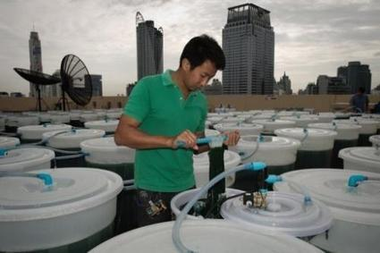 Edible algae—coming to a rooftop near you? | Skylarkers | Scoop.it
