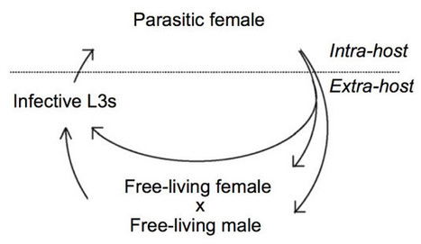80 fold (!) difference in life span in one organism - Extreme aging plasticity | Amazing Science | Scoop.it