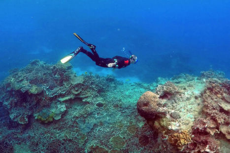 Scientists investigate what nearly destroyed the Great Barrier Reef 125,000 years ago | Oceans and Wildlife | Scoop.it