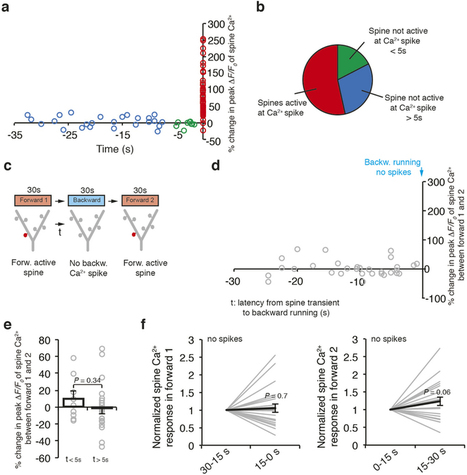 Branch-specific dendritic Ca2+ spikes cause persistent synaptic plasticity   Neuroscience_topics   Scoop.it