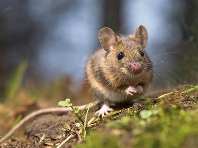 Νέο παγκόσμιο ρεκόρ του πιο σφιχτού και μικρού κόμπου στη φύση | SCIENCE NEWS | Scoop.it