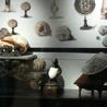 Musées, art & médiation culturelle