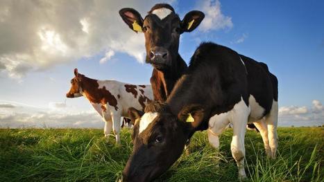El abuso de antibióticos en ganadería amenaza nuestra salud | Apasionadas por la salud y lo natural | Scoop.it
