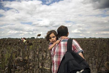'Refugiado', la palabra del año según la Fundéu | Mexicanos en Castilla y Leon | Scoop.it