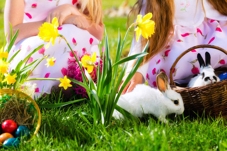 Companion Animal Psychology: What about the rabbits?   Animals R Us   Scoop.it