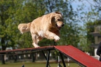 Twenty-one Fun Things to Do With a Dog | Pets | Scoop.it