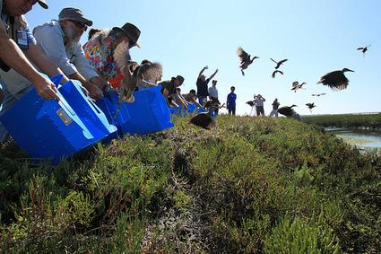 Saving The Birds At Seal Beach Wildlife Refuge - Neon Tommy | Birds and Birding | Scoop.it
