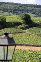 Exploring Burgundy Cote d'Or | Wine business | Scoop.it