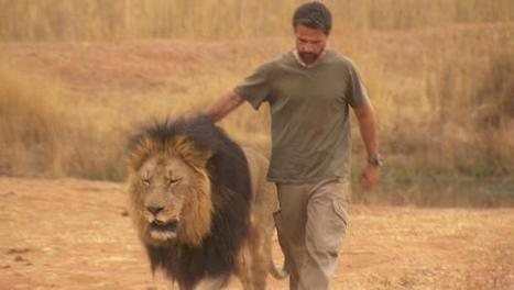 60 Minutes Lions, Cub Petting and more | Trophy Hunting: It's Impact on Wildlife and People | Scoop.it