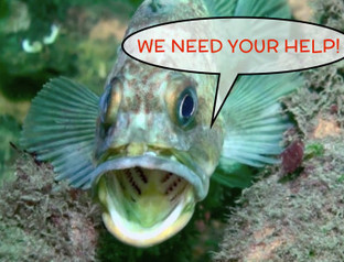 Contribute to help bring Puget Sound to a classroom near you | Undersea Exploration | Scoop.it