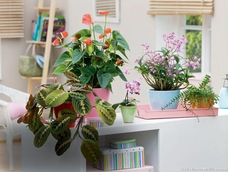 les plantes depolluantes purifier l air de la maison. Black Bedroom Furniture Sets. Home Design Ideas