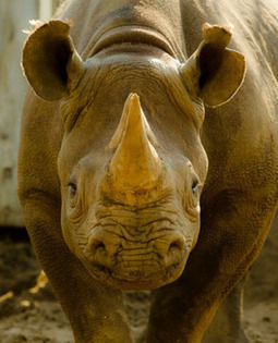 Seized money to fund anti poaching unit | Help save our Rhinos | Scoop.it