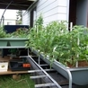 Build An Aquaponics System At Home Step By Step