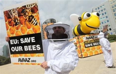 Abeilles: interdiction provisoire de 3 pesticides mortels | Côté Jardin | Scoop.it