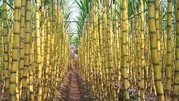 Mauritius wants to diversify sugar biz; inks pact with India. @investorseurope #blockchain   Culture, Humour, the Brave, the Foolhardy and the Damned   Scoop.it