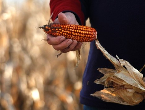 Biotech, farmer associations key for climate adaptation - panel - Reuters AlertNet (blog) | Complex Insight  - Understanding our world | Scoop.it
