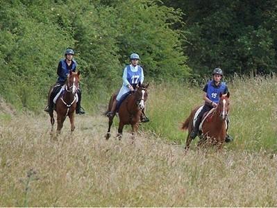 Course d'endurance équestre dans la forêt - ouest-france.fr | Cheval et sport | Scoop.it