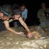 Malecón dominicano bendecido con el desove de una nueva tortuga que le ha seguido los pasos a Güiby