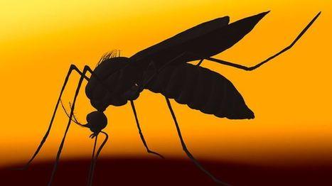 Unusual US Zika virus case baffles experts - BBC News   Zika Virus News   Scoop.it