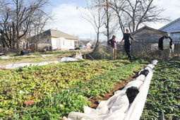 Urban farming brings a community  together in Oklahoma   Organic Farming   Scoop.it