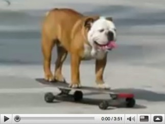 Exactly How Much Did That Skateboarding Dog Earn?   Developing Creativity   Scoop.it