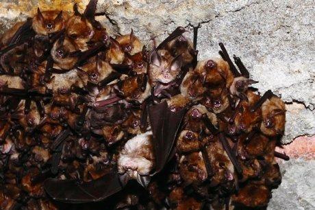 Les ailes noires de la nuit   Ecotourisme Landes de Gascogne   Scoop.it