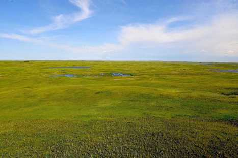 The enormous threat to America's last grasslands | The Glory of the Garden | Scoop.it