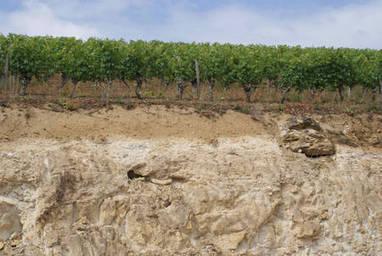 Dossier > Cabernet franc, le cépage du val de Loire | AOC Chinon et Vins de loire | Scoop.it