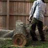 All American Tree Care